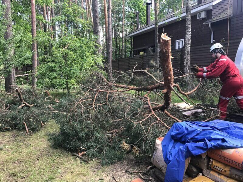 Спил деревьев арбористами с частичным завешиванием веток в Черноголовке